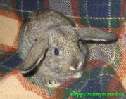 карликовые кролики всех пород для Вас