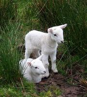 Продам молоденьких козочек и козлят.