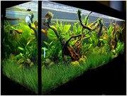 Обслуживание и оформление пресноводных аквариумов на любой вкус в горо