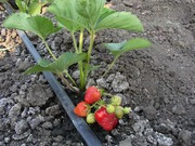 Полив сада и огорода! Капельное орошение