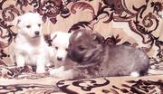 Мелкие дворовые собачки