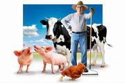 Заработок от1000$ до5000$ в мес. Новый бизнес в вашем частном секторе