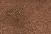 ЛДСП в деталях Дуб Чарльстон тёмно-коричневый Q3154 RO Egger