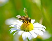 Продам мед в 14кг ведрах 2017 года сбора