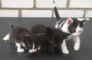 Трое замечательных котят ждут своих хозяев