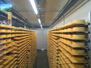 Действующий молочный завод,  прибыльный,  существует с 2000 года.