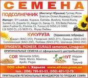 Семена подсолнечника (качественный посевной материал)
