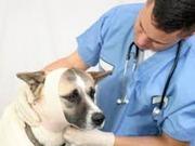 Выезд ветеринара на дом.Вектлиника