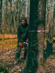 Профессиональная обрезка и спил деревьев