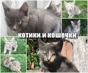 Очень милые котята ждут хозяина