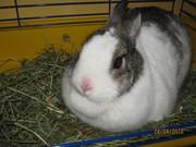Срочно продам карликового кролика !